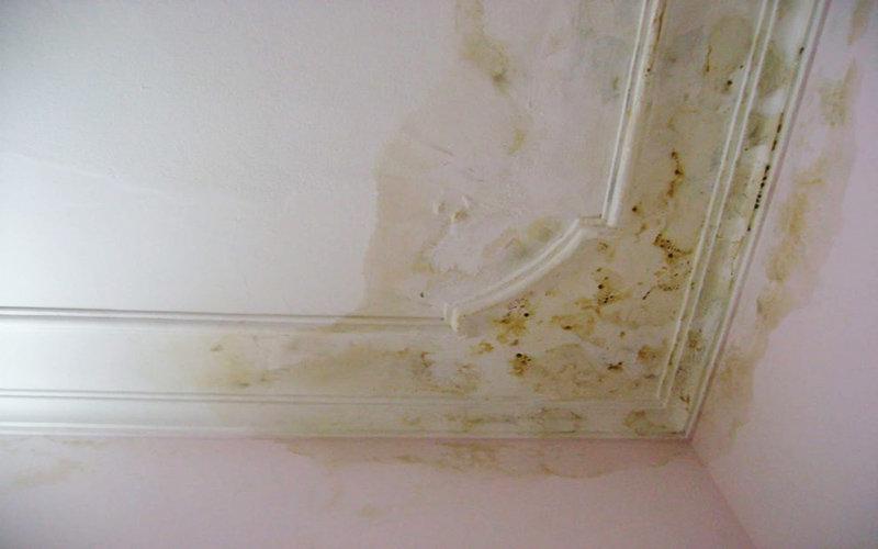 nguyên nhân trần tường nhà bị thấm